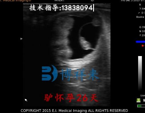兽用B超影像驴怀孕26天