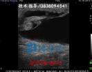 兽用B超影像驴怀孕40天