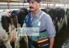 牛用B超超声对兽医和养殖者的用处